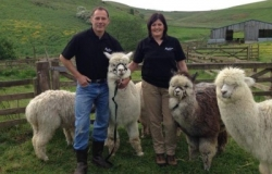 Owners of Beirhope Alpacas with their alpacas