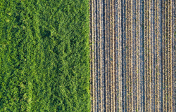 Rows of soil before planting