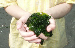Mara Seaweed won £25k in the 2013 Competition
